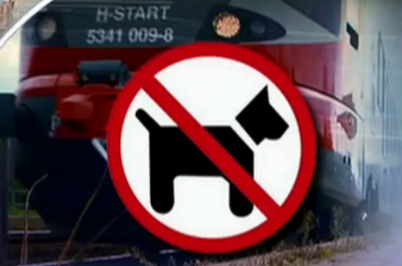RTL Híradó - Kutyával a Balatonra